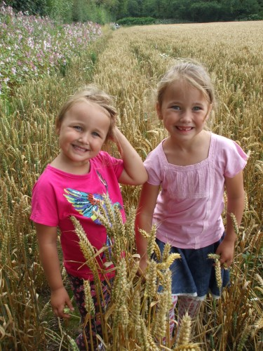 Some of the crops were almost as tall as my grand-daughters