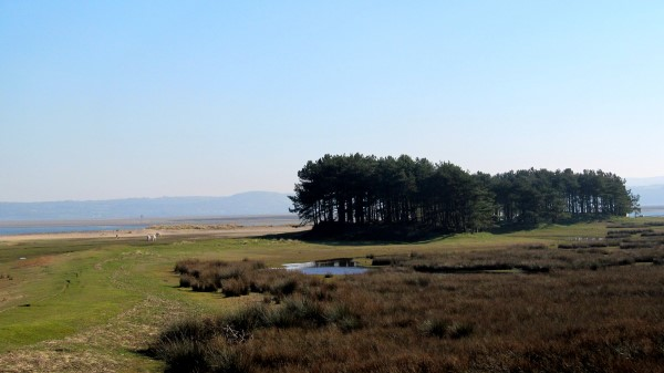 Upland Gower – the bit without the tourists