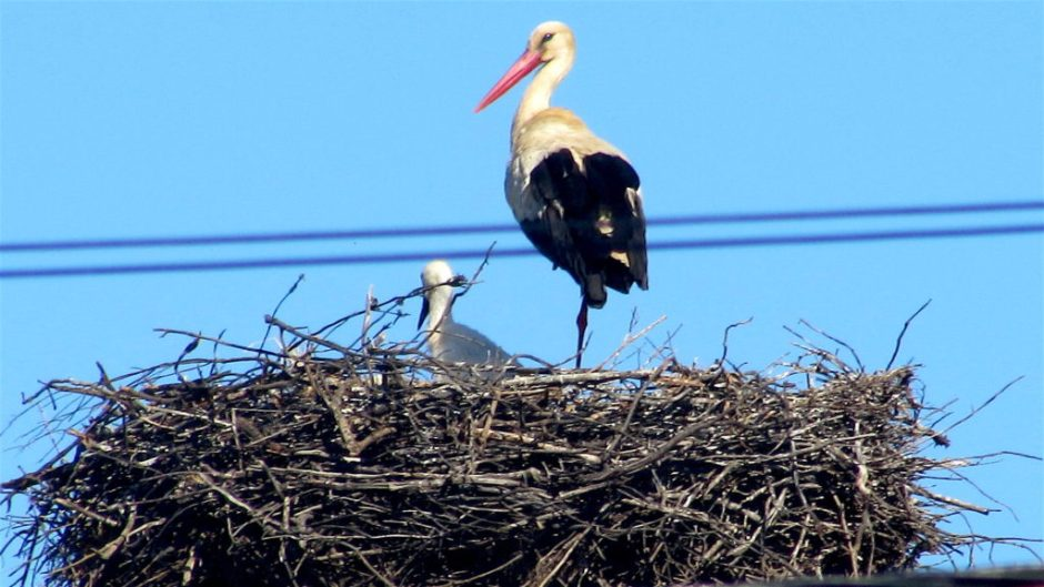 Storks are common in the Algarve - this was our first sighting