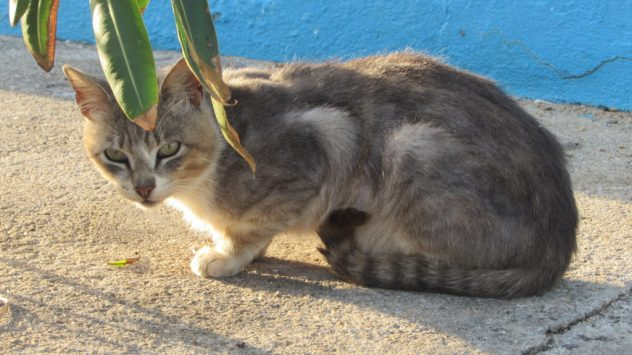 A cat living along the limestone cliffs of the Peniche headland, on Portugal's Silver Coast