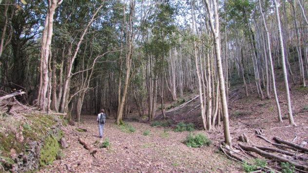 Woodland near Woodcombe, Minehead, Somerset