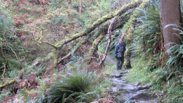 South West Coast Path, Exmoor National Park, Devon