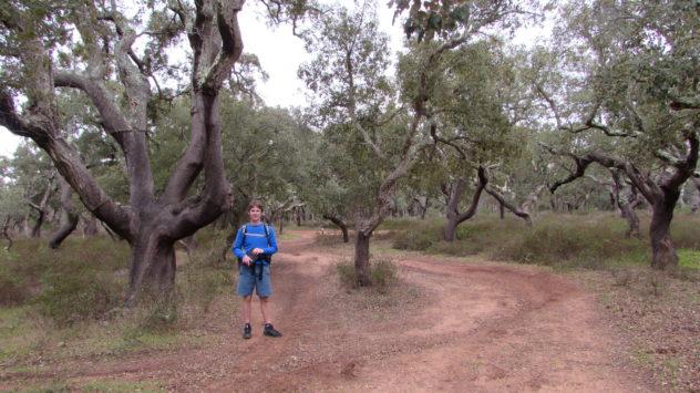 Cork forest, Bensafrim, Via Algarviana, Algarve
