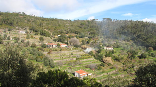 Agricultural terraces, Serra de Monchique, Algarve