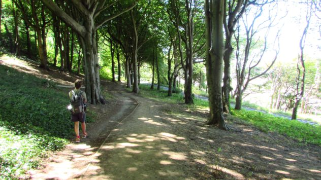 Weston Woods, Weston-super-Mare, North Somerset