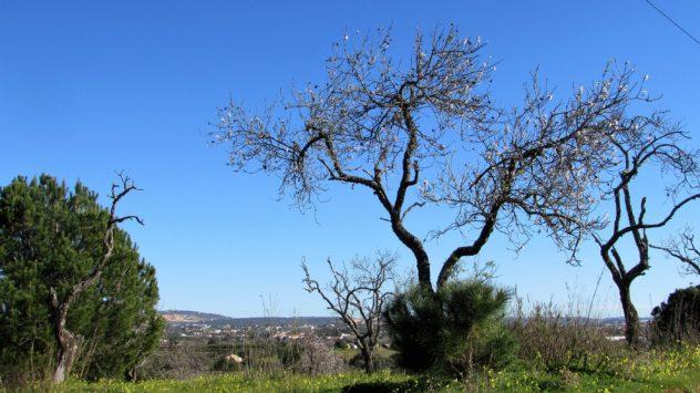 Rural landscape, Olhos de Água, Algarve