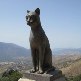 Black cat, mirador, Soportújar, Alpujarras