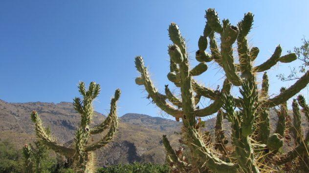 Guadalfeo valley, Orgiva, Alpujarras,