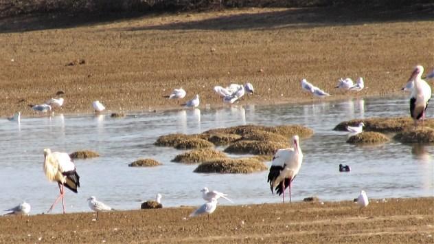 Birds at Salgados, Silves, Algarve