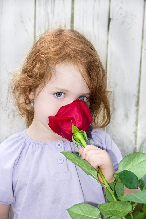 a little girl smelling a big red rose