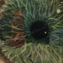 Barn Eye, Acrylic Paint on Canvas, 2014