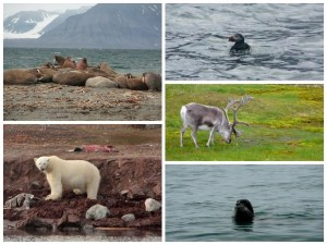 arctic animals1