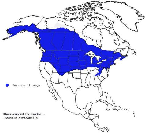 Black-capped chickadee range