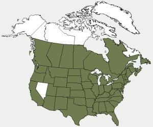 broadleaf arrowhead distribution