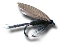 The black gnat wet fly is a simple fly to tie. It is a forgiving fly that really does not need exact precison
