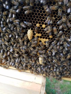 so you want to be a beekeeper - learn all about it