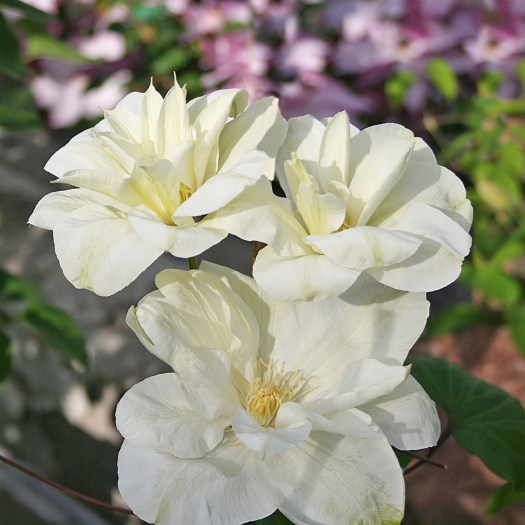 'Mary-Claire'