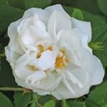 'Quatre Saisons Blanc Mousseaux' - Bifera-Gruppen