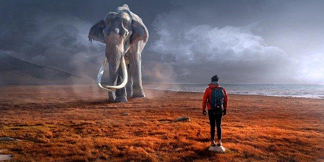 soyons un trader calme....comme l'éléphant.