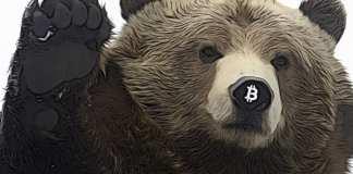 bear medved medvedi trh