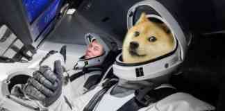 Elon si kupuje psa! Jeden coin kvůli tomu udělal 500 %, ale nebyl to DOGE