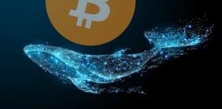 Velryby znovu ve velkém nakupují Bitcoiny - A vy prodáváte?