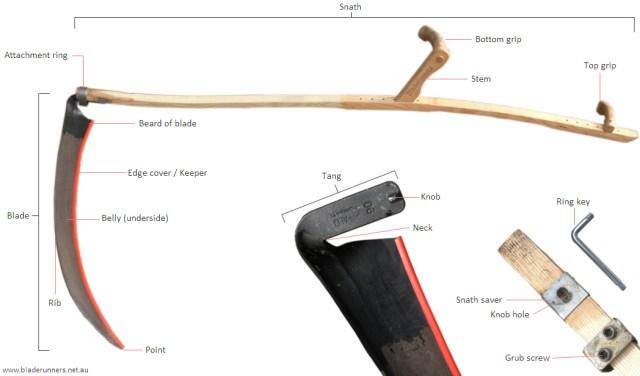 scythe-anatomy