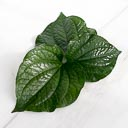 Betel Leaf (ใบชะพลู)