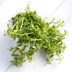 Rice paddy herb (ผักแขยง)