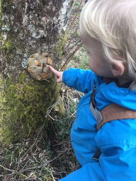 tree imps