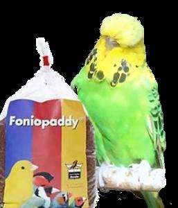 1 kg bag of Foniopaddy
