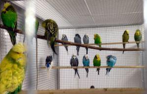 More outstanding birds