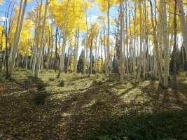 picture of aspen grove on bryce 100 course