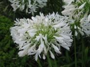 flowers1064
