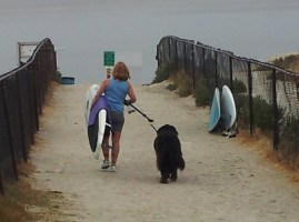 girl-dog-board-walking