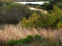 Lake at Calavera