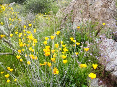 Wildflowers On Mesquite Canyon Trail
