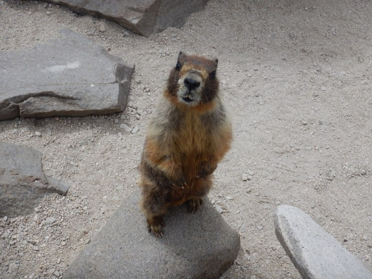 This little guy at the summit was hilarious and kept trying to steal everyone's food
