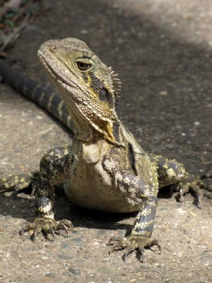 Love lizards!