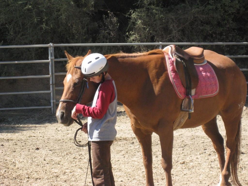 Horse Program Memory: Phoenix