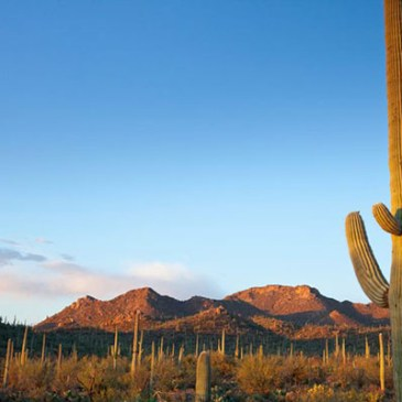 8 Best Day Hikes in Saguaro National Park