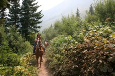 Horseback riders along trail