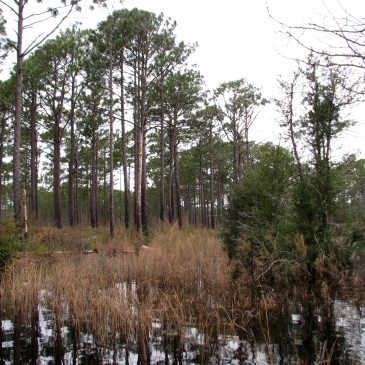 Best Hikes in Croatan National Forest (NC)