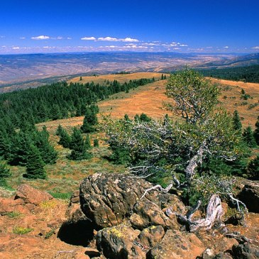 Best Hikes in Ochoco National Forest (OR)