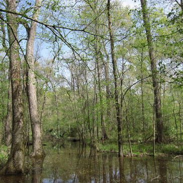 Best Hikes in National Forests of Texas (TX)