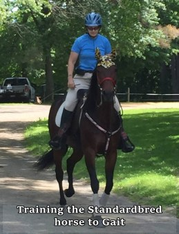 training the Standardbred horse to gait