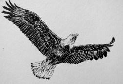34 AndreaWillingham Eagle