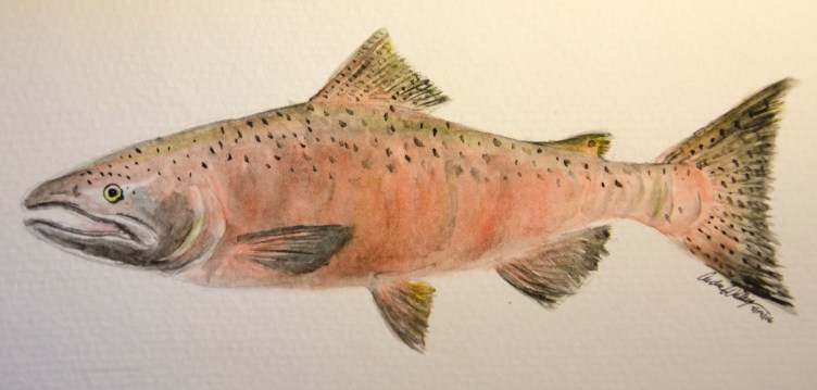34_Andrea_Spring Chinook