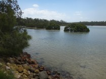 Shallow estuary at Narrawallee Creek
