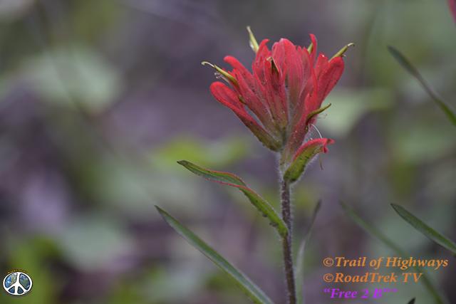 Mount Yale Trail-14er-Colorado-Hiking-Climbing-Trail of Highways-RoadTrek TV-Social SEO-Organic-Content Marketing-Tom Ski-Skibowski-Photography-Travel-1